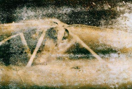 Photographie Starn - Atractted to Light 19 (Ephemera)
