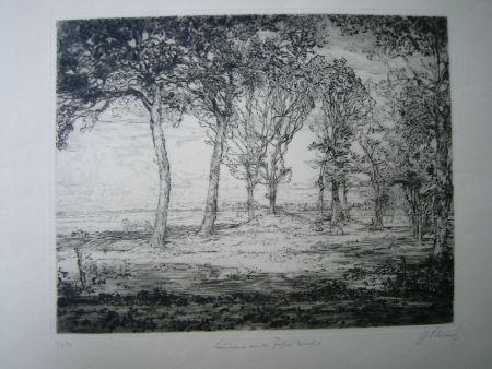 Pointe-Sèche Cissarz - Bäume an der Föhrer Marsch