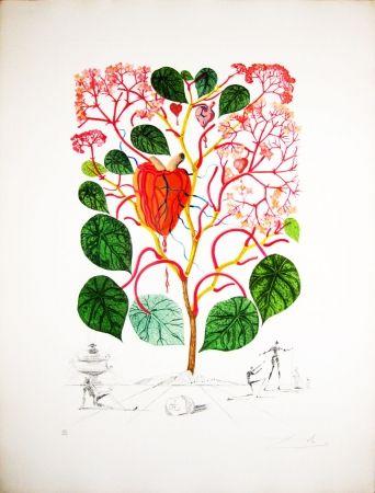 Gravure Dali - Begonia