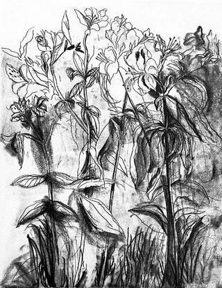 Gravure Dine - Black & White Flowers Iv