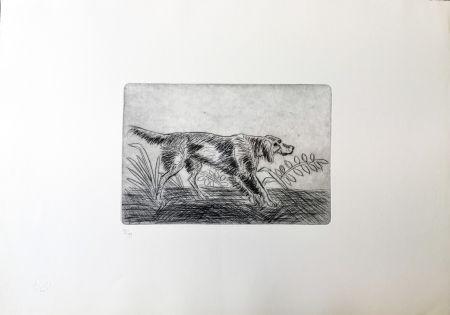 Pointe-Sèche Ligabue - Cane Setter