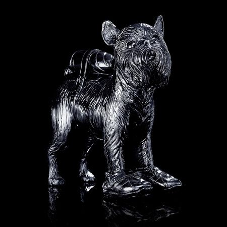 Multiple Sweetlove - Cloned black Griffon Bruxellois with pet bottle