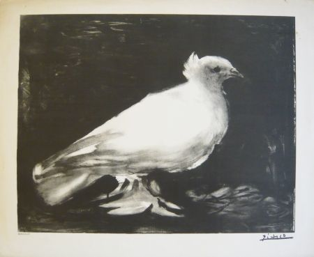 Lithographie Picasso - Colombe
