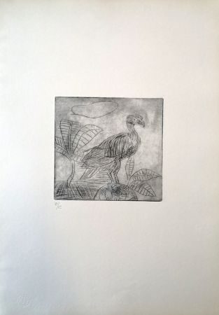Pointe-Sèche Ligabue - Condor
