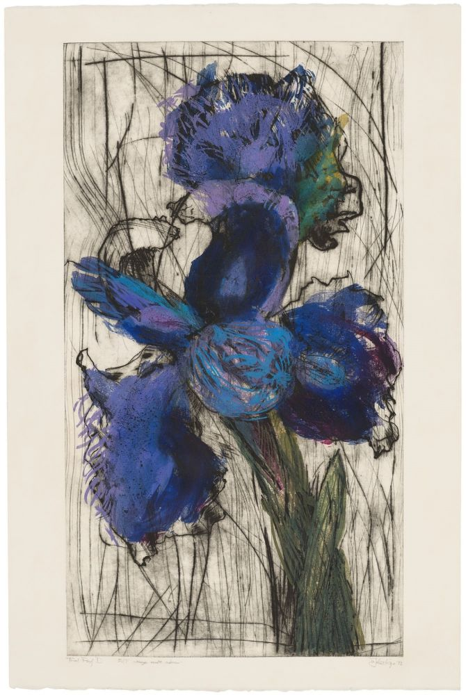 Eau-Forte Et Aquatinte Kentridge - Dutch Iris (Trial Proof B)