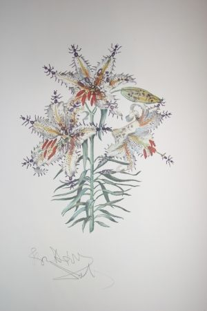 Lithographie Dali - Erotic Lily (surrealistic flowers)