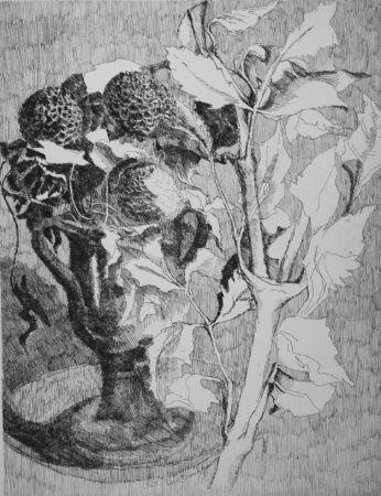 Eau-Forte Bianchi Barriviera - Fiori e foglie bianche