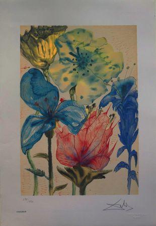 Lithographie Dali - Fiori Surrealisti