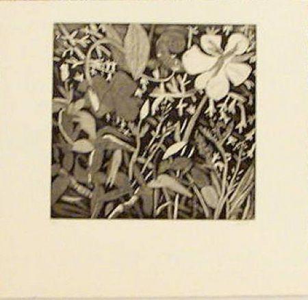 Gravure Montes (De) - Floral Study
