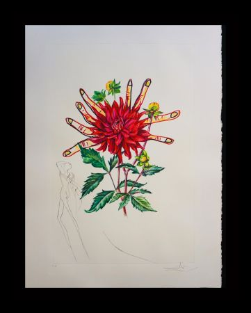 Gravure Dali - Florals Dahlia Venus