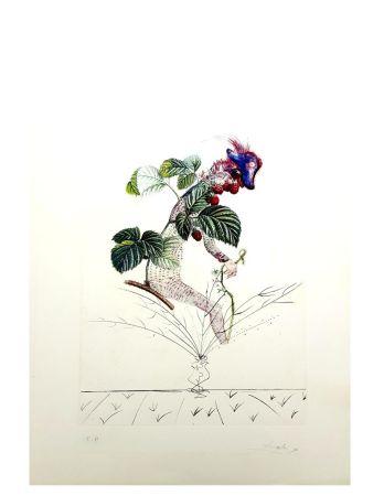 Lithographie Dali - Flordali - Framboise