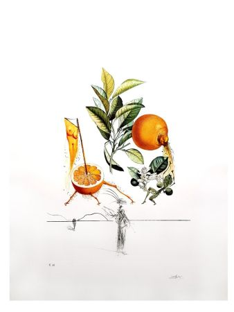 Lithographie Dali - Flordali - Orange Erotique
