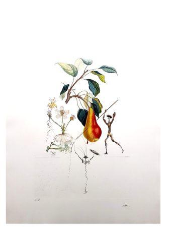 Lithographie Dali - Flordali - Poire de Don Quichotte