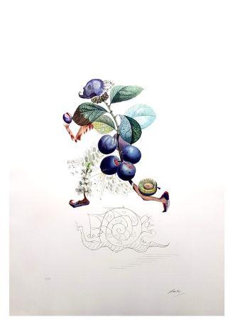 Lithographie Dali - Flordali - Pruneau