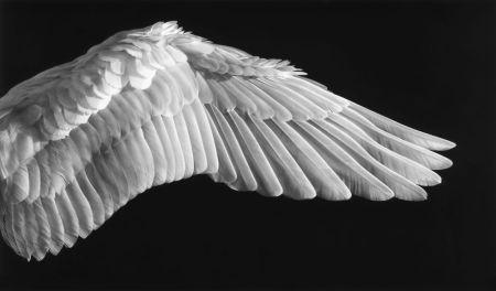 Photographie Longo - Gabriel'S Wing