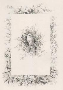 Livre Illustré Giacomelli - Histoire d'un merle blanc. Compositions de Hector Giacomelli gravées à l'eau-forte par L. Buisson.