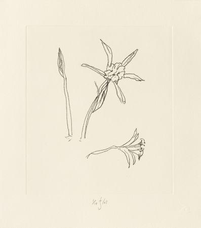 Gravure Flanagan - Ibiza Meadow Flower