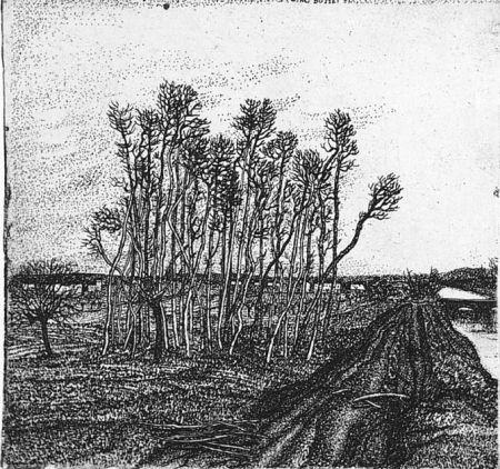 Eau-Forte Bozzetti - Il boschetto lungo l'argine (II versione)