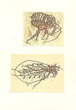 Livre Illustré Saroni - Insettario
