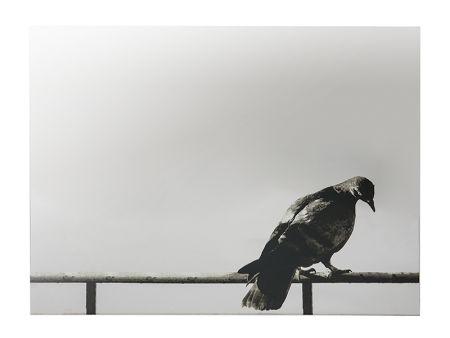 Sérigraphie Pistoletto - La Colomba