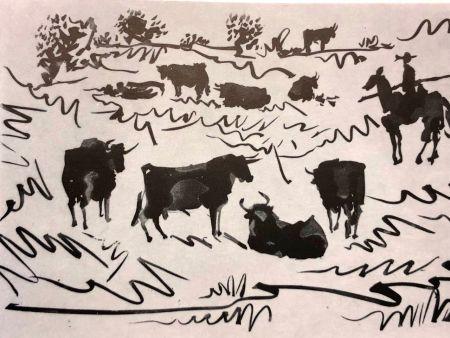 Pointe-Sèche Picasso - La Tauromaquia
