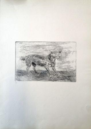 Pointe-Sèche Ligabue - Lince