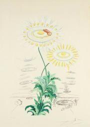Lithographie Dali - Marguerites