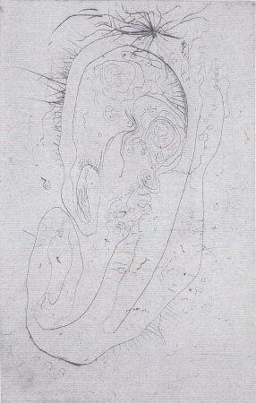 Livre Illustré Wols - Naturelles