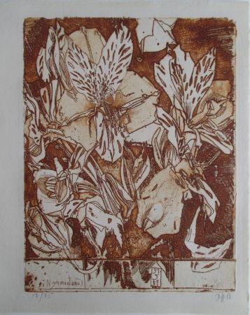 Gravure Janssen - Nigromontanus