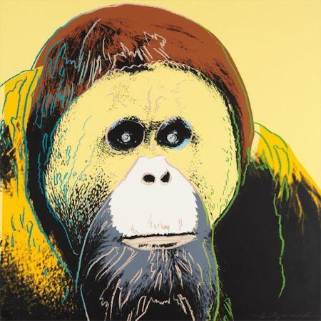 Sérigraphie Warhol - Orangutan
