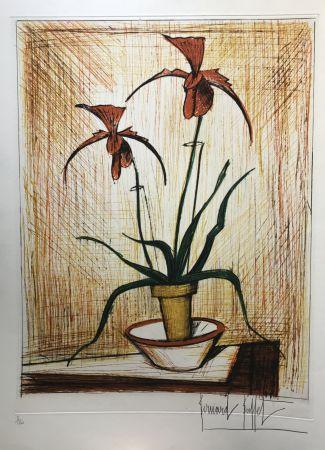 Pointe-Sèche Buffet - Orchidées