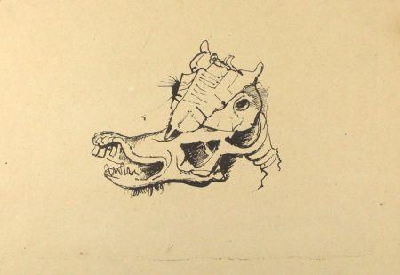 Lithographie Hofer - Pferdeschädel / Horse Skull