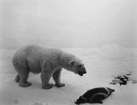 Lithographie Sugimoto - Polar Bear