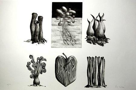 Lithographie Lionni - Senza titolo