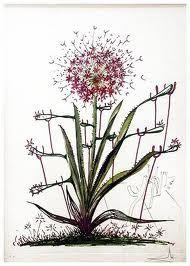 Pointe-Sèche Dali - Surrealistic Flowers, 543, Allium chrisophi pilique pubescentes
