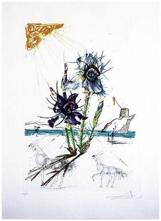Pointe-Sèche Dali - Surrealistic Flowers, 544, Iris germanica cum ocellis italicis
