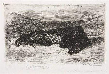 Gravure Delacroix - Tigre couché dans le désert