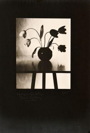 Photographie Catany - Tulipes