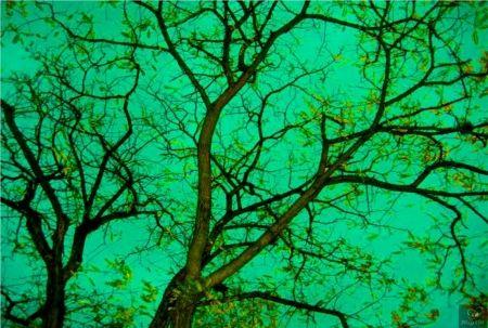 Photographie Bohorquez - Verde