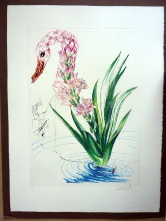 Gravure Dali - Water Hibiscus Plus Swan (Florals)