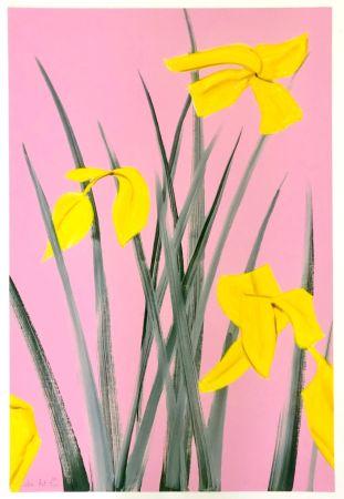 Gravure Katz - Yellow Flags 3